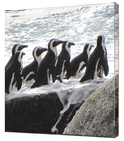 pinguins foto op canvas