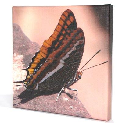 canvasje vlinder