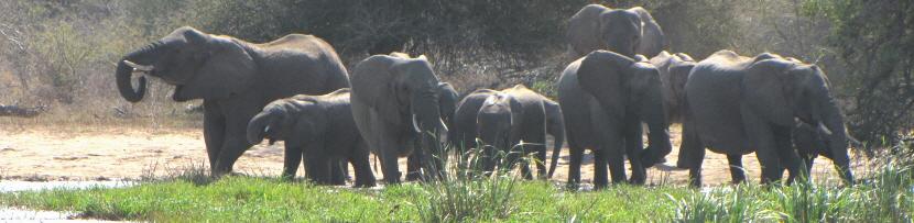 olifanten Z-Afrika