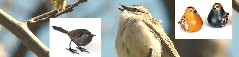 vogelconcerten